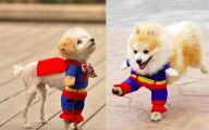 Funny Costume For Dogs 22 Widescreen Wallpaper