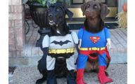 Funny Costume For Dogs 24 Desktop Background