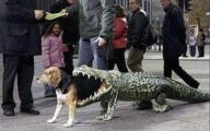 Funny Costume For Dogs 26 Wide Wallpaper