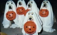 Funny Costume For Dogs 27 Cool Wallpaper