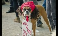 Funny Costume For Dogs 29 Hd Wallpaper