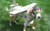 Funny Costume For Dogs 3 Free Wallpaper
