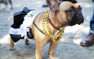 Funny Costume For Dogs 31 High Resolution Wallpaper