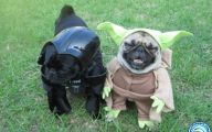 Funny Costume For Dogs 34 Background Wallpaper