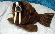 Funny Costume For Dogs 35 High Resolution Wallpaper