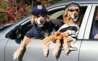 Funny Costume For Dogs 38 Widescreen Wallpaper