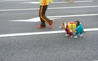 Funny Costume For Dogs 4 Widescreen Wallpaper