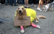 Funny Costume For Dogs 5 Cool Wallpaper