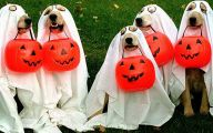 Funny Costume For Dogs 8 Cool Hd Wallpaper