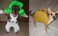 Funny Costume For Dogs 9 Wide Wallpaper