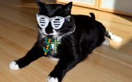 Funny Costumes For Cats 10 Wide Wallpaper
