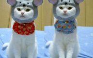 Funny Costumes For Cats 11 Desktop Wallpaper