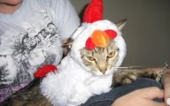Funny Costumes For Cats 12 Cool Wallpaper