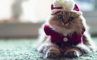 Funny Costumes For Cats 14 Background Wallpaper