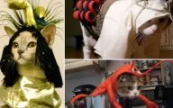 Funny Costumes For Cats 15 Wide Wallpaper