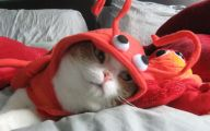 Funny Costumes For Cats 17 Background Wallpaper