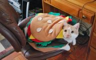 Funny Costumes For Cats 20 Desktop Wallpaper