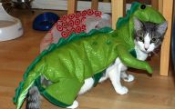 Funny Costumes For Cats 21 Hd Wallpaper