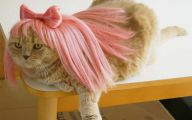 Funny Costumes For Cats 24 Background Wallpaper