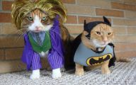 Funny Costumes For Cats 29 Widescreen Wallpaper