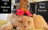 Funny Costumes For Cats 32 Desktop Wallpaper