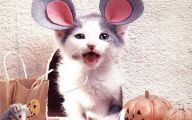 Funny Costumes For Cats 34 High Resolution Wallpaper