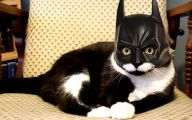Funny Costumes For Cats 36 High Resolution Wallpaper