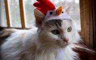 Funny Costumes For Cats 37 Hd Wallpaper