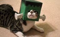 Funny Costumes For Cats 38 Wide Wallpaper