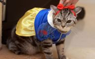 Funny Costumes For Cats 39 Cool Hd Wallpaper