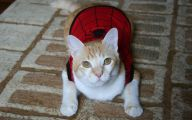 Funny Costumes For Cats 4 Cool Wallpaper