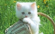 Funny Cute Cats  1 Widescreen Wallpaper