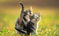 Funny Cute Cats  13 Desktop Wallpaper