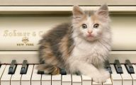 Funny Cute Cats  2 Widescreen Wallpaper