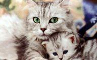 Funny Cute Cats  22 Free Hd Wallpaper