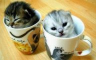 Funny Cute Cats  23 Widescreen Wallpaper