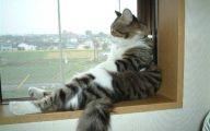 Funny Cute Cats  24 Desktop Background