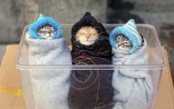 Funny Cute Cats  27 Background Wallpaper