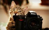 Funny Cute Cats  28 Free Wallpaper