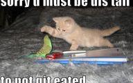 Funny Cute Cats  31 Free Hd Wallpaper