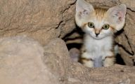 Funny Cute Cats  35 Widescreen Wallpaper