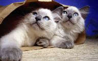 Funny Cute Cats  37 Free Wallpaper