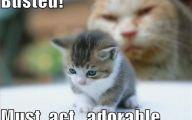 Funny Cute Cats  39 Cool Hd Wallpaper