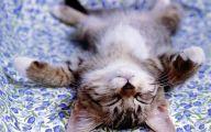 Funny Cute Cats  43 Wide Wallpaper