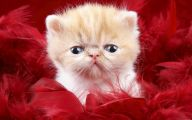 Funny Cute Cats  8 Background