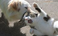 Funny Dogs And Cats Living Together 10 Wide Wallpaper