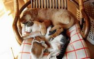 Funny Dogs And Cats Living Together 11 Desktop Background