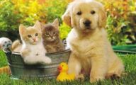 Funny Dogs And Cats Living Together 12 Background Wallpaper