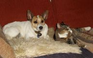 Funny Dogs And Cats Living Together 13 Wide Wallpaper