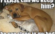 Funny Dogs And Cats Living Together 16 Wide Wallpaper